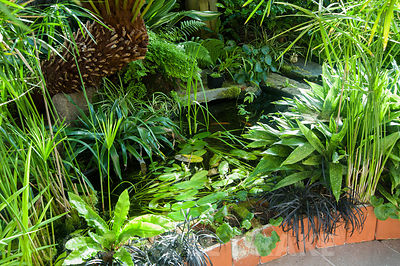 Conservatory built between the house and the rocky outcrop behind it, is home to a range of tender species such as aspidistras and Cyperus involucratus and includes a pond with goldfish. Windy Hall, Windermere, Cumbria, UK