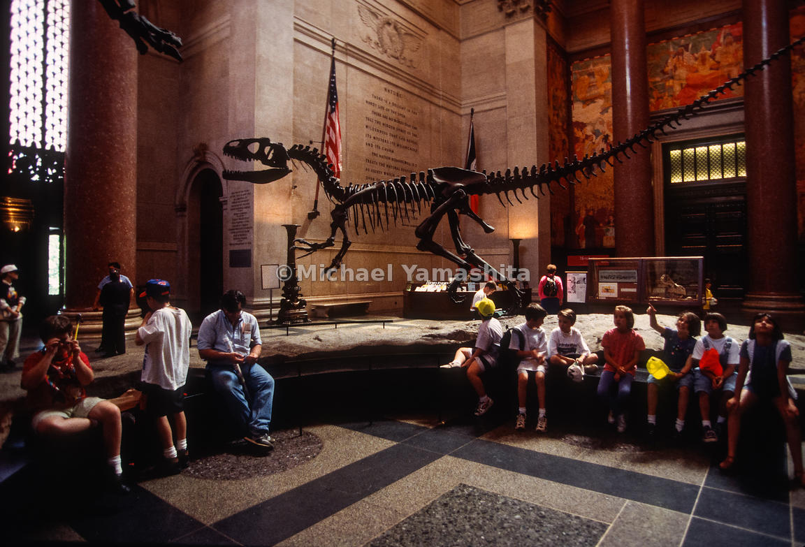 Museum of Natural History.Lobby - Dinosaur Exhibit.New York City, NY