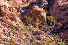 Red-Rocks-300dpi-fullsize-39