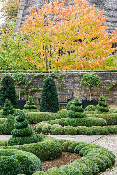 Clipped box and yew in the Parterre Garden with standard laurels in Versailles planters framing a bench below orange tints of tree behind. Bourton House, Bourton-on-the-Hill, Moreton-in-Marsh, Glos, UK