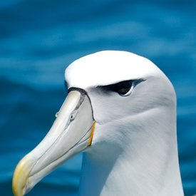 Sea birds photos