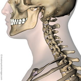 Neck images