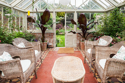 Victorian conservatory with wicker furniture surrounded by lush plants including pelargoniums, begonias, fuchsias and bananas. Bosvigo, Truro, Cornwall, UK