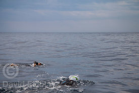 Open waters swimmers during Oncoswim 2016 edition