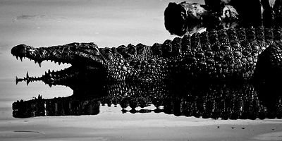 In and outside crocodile © Laurent Baheux