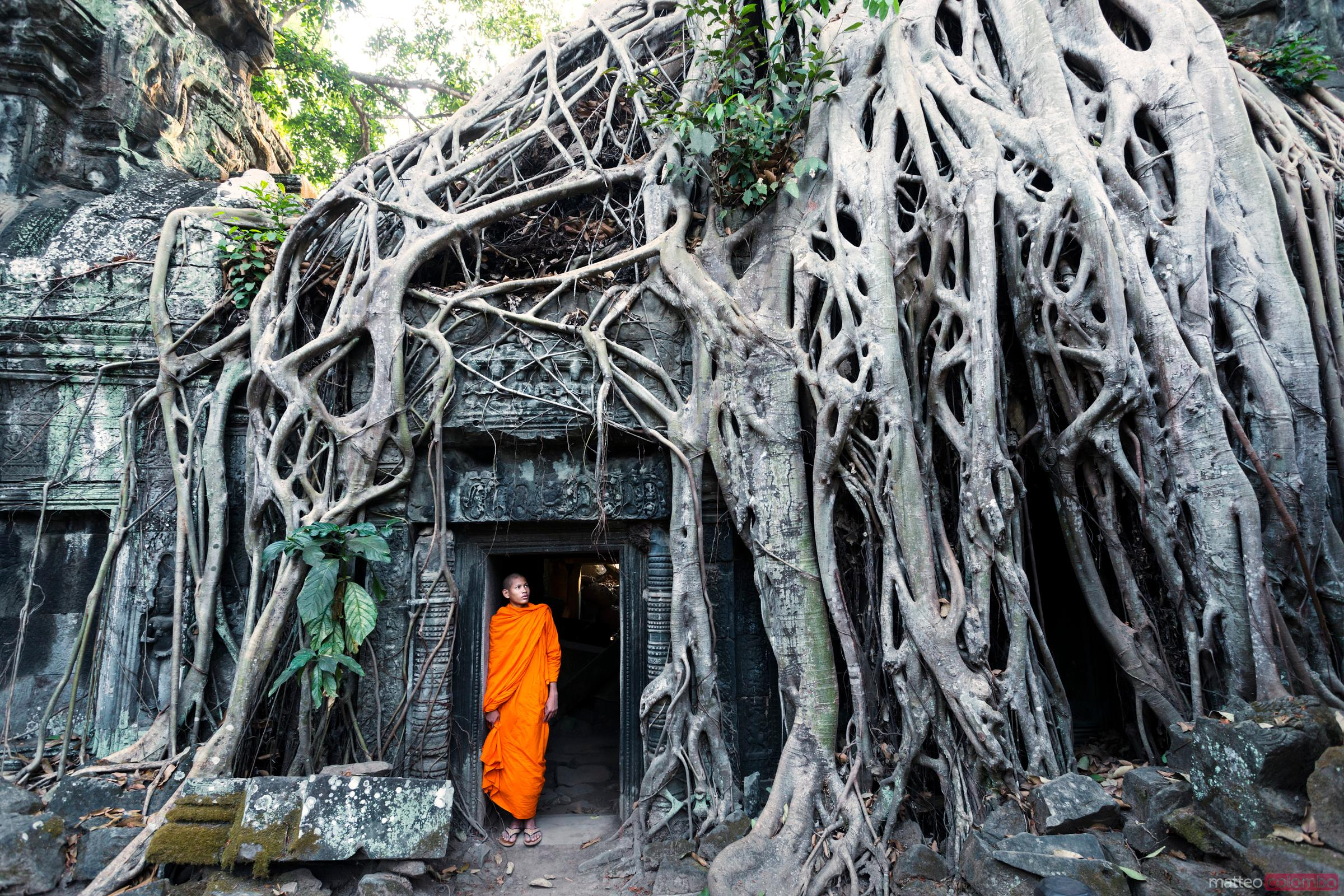 Famous big tree inside Ta Phrom temple, Angkor, Cambodia
