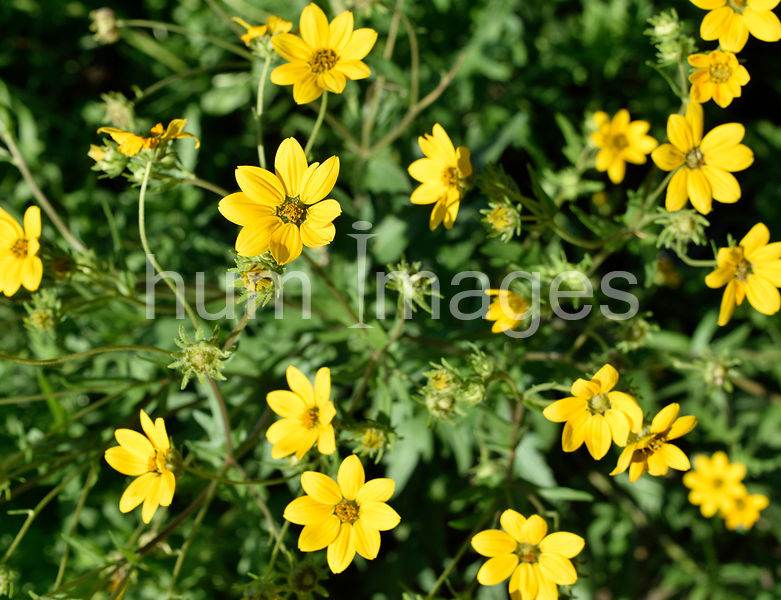 Nature Stock Photos: Yellow flowers