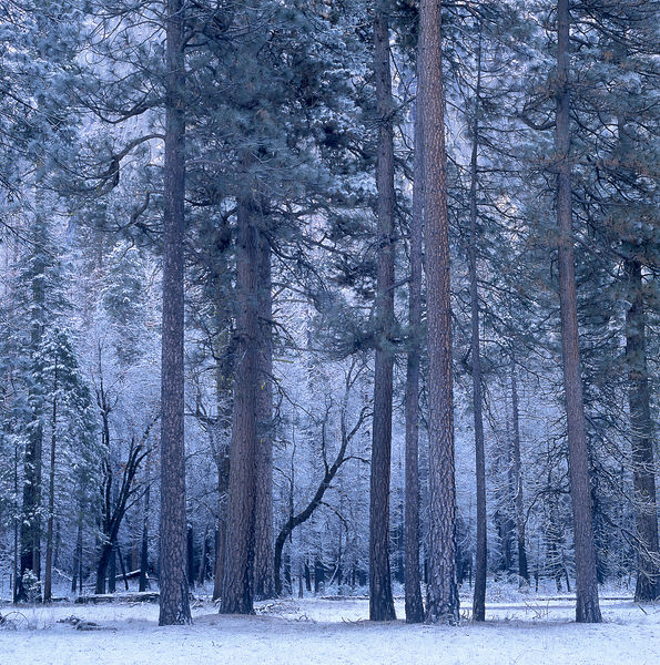 036-California_CA141059_Yosemite_Snow_Storm_009_Preview