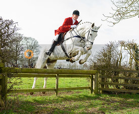 jumping a  hunt jump away from the meet