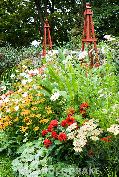 Decorative border punctuated by red wooden obelisks features brightly coloured dahlias, Rudbeckia 'Marmalade', Achillea 'Terracotta', Cosmos 'Purity', hedychiums and an edging of Alchemilla mollis. The Shute, nr Ventnor, Isle of Wight, UK