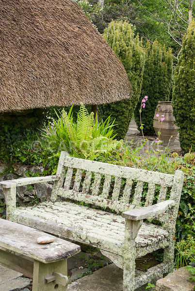 Lichen encrusted wooden bench with Thatched Garden beyond featuring fastigiate yews, Taxus baccata Aurea Group, around large pithoi. Caervallack Farm, St Martin, Helston, Cornwall, UK