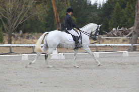 SI_Festival_of_Dressage_310115_Level_5_Champ_0822