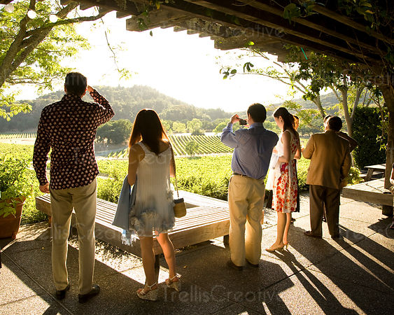 People on patio looking out across a vineyard on a sunny day