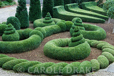 Clipped box and yew in the Parterre Garden. Bourton House, Bourton-on-the-Hill, Moreton-in-Marsh, Glos, UK