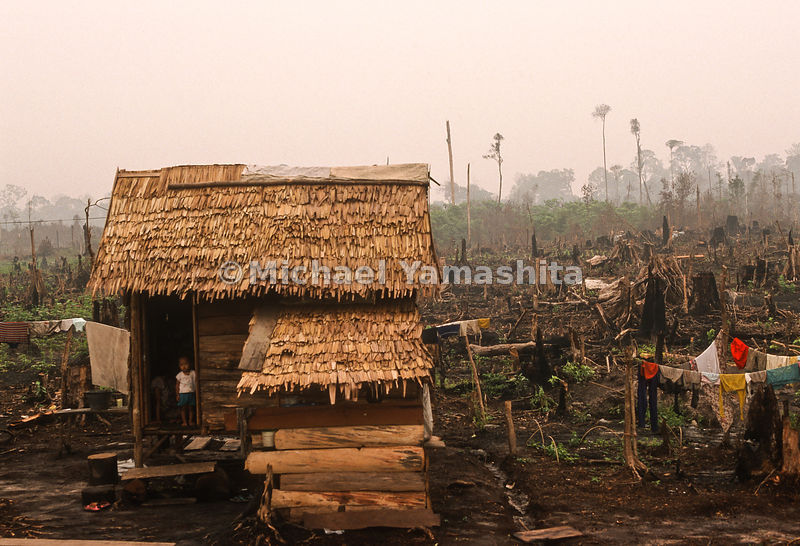 A lonely shack in a field of destroyed cops which was caused by Indonesia's Plague of Fire.