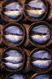 Fish in market