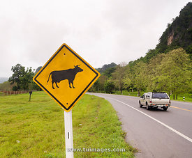 cow crossing sign at road