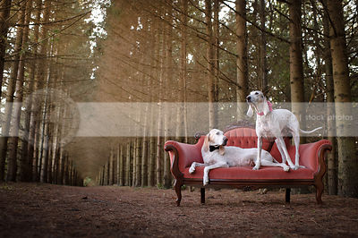 two bowtied white hounds lounging on antique settee in forest