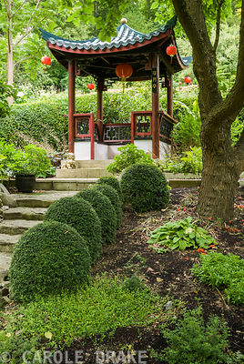 'Harvesting the Moon Pavilion' in the Red Wall garden at top of steps edged with clipped Lonicera nitida and river washed limestone. Beggars Knoll, Newtown, Westbury, Wiltshire, UK