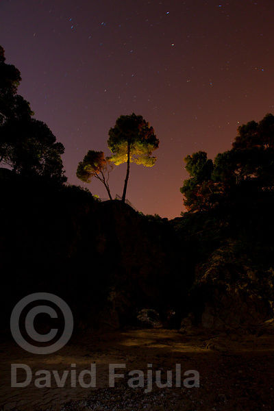 Pines up on a cliff, at La Roca del Paller creek (Cala de la Roca del Paller)