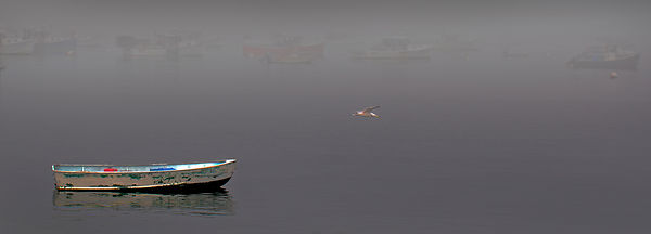 Exhibit_Seagull_and_Boat_ver_6_print_24_22_wide_adrift_in_fog_Rockland_2015_1287
