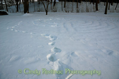 Footprints in Snow Labyrinth