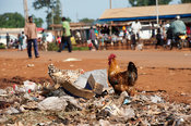 Busy border town of Bumala in Kenya, near the border with Uganda, with chickens on rubbish tip.