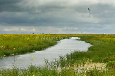 Meadowlands of the Tejo Estuary Nature Reserve. Portugal