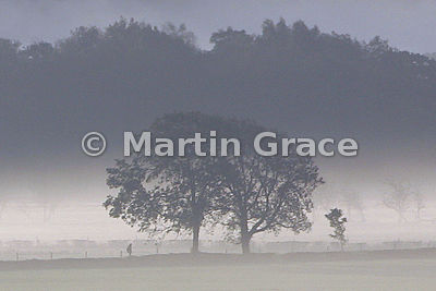 Morning Mist with Figure