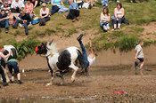 Gypsy rider at Appleby Horse Fair falls off back of piebald pony he was riding bareback in River Eden