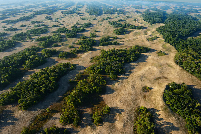 Aerial view over Letea forest, within the Danube delta rewilding area, Romania, June 2012