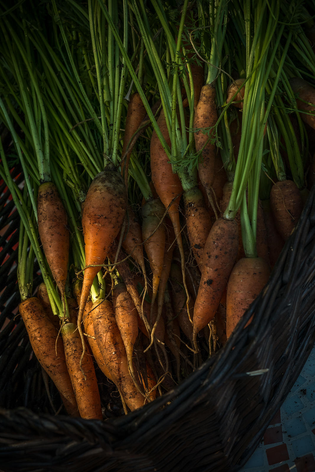 Farm to table photography by Jason Tinacci