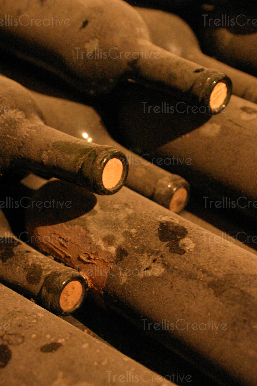 Ageing dusty bordeaux wine bottles in a winery cave