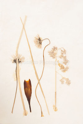 beautiful dried flowers
