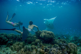 Snorkelling with the Manta Rays, near Uepi Island