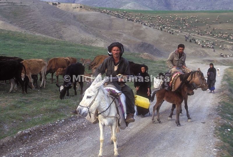 Wheep and Shephards enroute to Koysanjag.