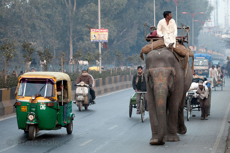 Elephant on a major road near the New Delhi Railway Station, Delhi, India