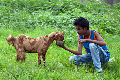 A boy feeds a goat in a small urban farm in Mahim, Mumbai, India.