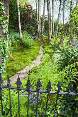 Moss path bordered by pillowy mounds of Polytrichum formosum. Windy Hall, Windermere, Cumbria, UK