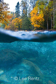 NORTH FORK SKOKOMISH RIVER IN AUTUMN