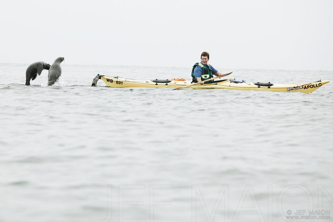 Seals play with kayak