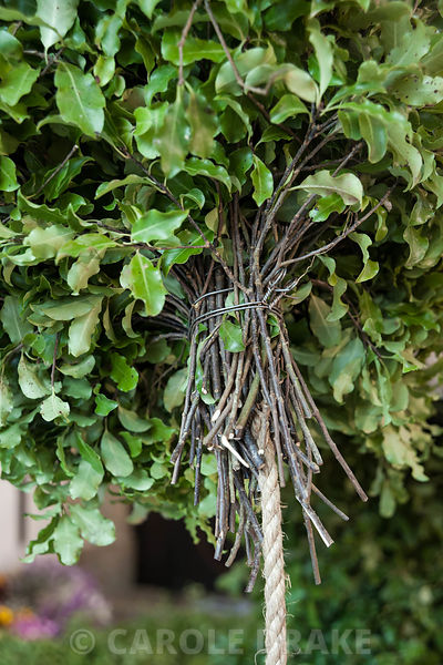 Swags of pittosporum are attached to a rope that forms the central core of the Christmas garland. Cotehele, St Dominick, nr Saltash, Cornwall, UK