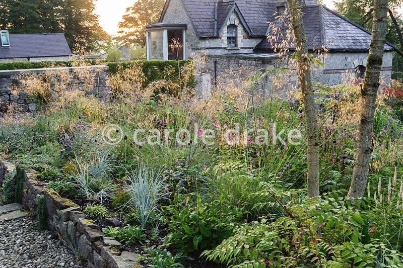 A mix of Stipa gigantea, Helictotrichon sempervirens, persicaria, Allium sphaerocephalon and Verbena bonariensis with former steward's house beyond.