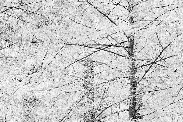 WINTER TOCCATA BLACK AND WHITE