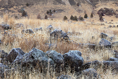 Lava rocks in the grass of Lava Beds National Monument, California