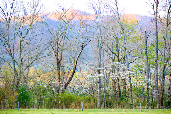 SPRING FOREST CADES COVE SMOKY MOUNTAINS COLOR