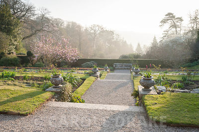Magnolia and rhododendrons viewed at dawn from the east terrace. Cotehele, Cornwall, UK
