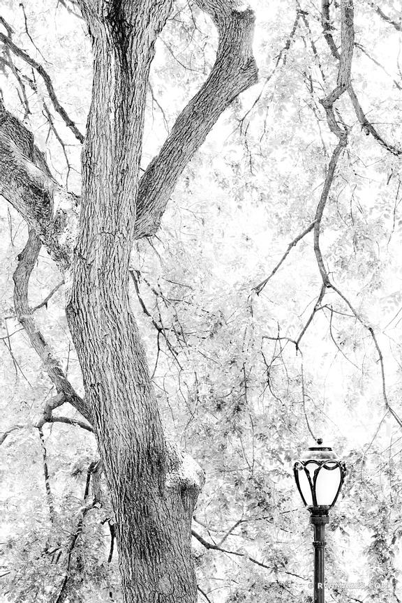STREET LAMP CENTRAL PARK MANHATTAN NEW YORK CITY BLACK AND WHITE VERTICAL