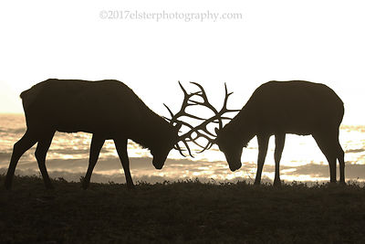 Deer and Elk photos
