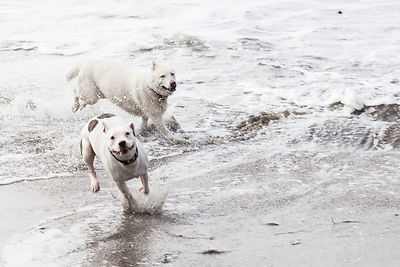 Happy dogs on the beach